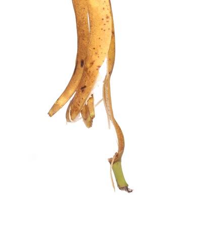 pendent: Banana peel is pendent