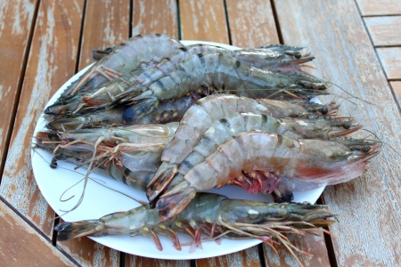 Fresh Shrimp in a white plate on a garden table  photo