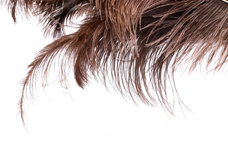upper half: Brown feathers the upper half of the background Stock Photo
