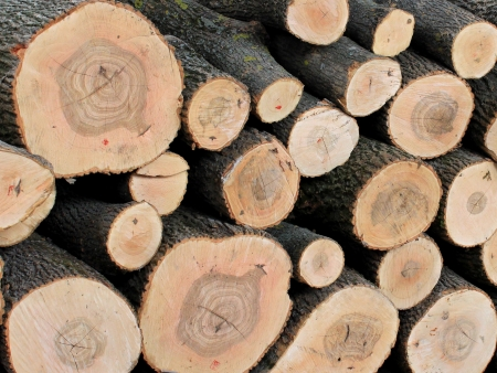 sawed: Sawed ends of logs stacked in a timber yard Stock Photo
