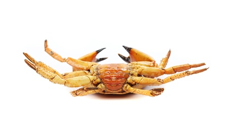 seafood red crab isolated on a white background photo