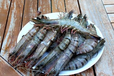 Fresh Shrimp on the white plate  Close up  photo