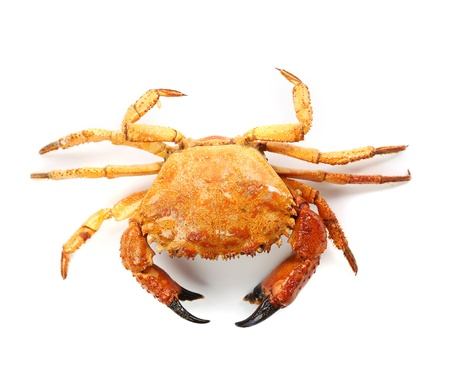 seafood red crab isolated on a white background