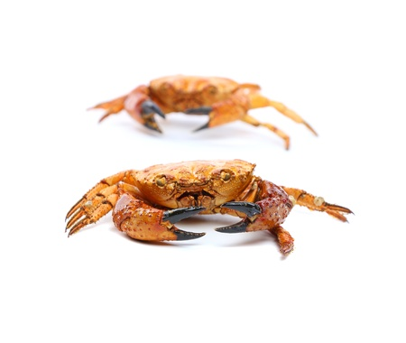Two seafood red crabs isolated on a white photo