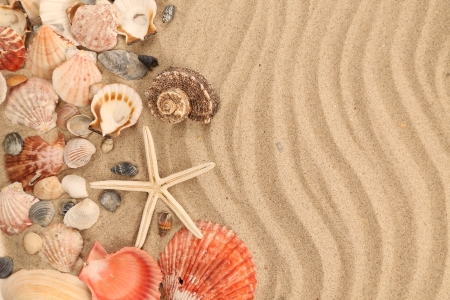 Background of sand, shells and sea start photo