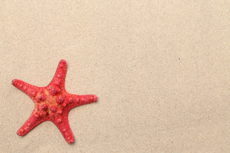 Red starfish on a sand background. Frame. photo