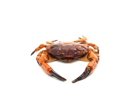 acute angle: mariscos cangrejo rojo aislado en un fondo blanco