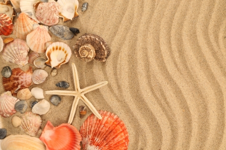 Background of sand, shells and sea start. Texture. photo
