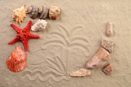 Composition of sand, shells, stones and starfish. Close up. photo