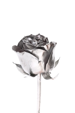 The photo of beautiful silver rose on a white background Stock Photo