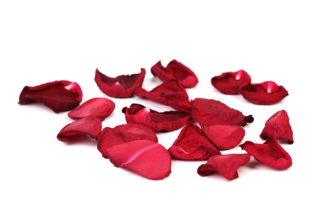 Withered rose petals.Isolated on a white background