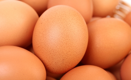 chicken farm: Top view of egg for web background