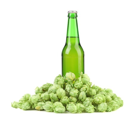 Bottle of beer and hop. Isolated on a white background. photo