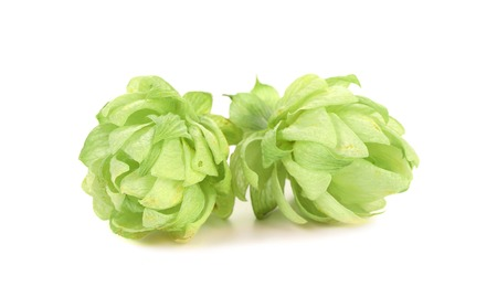Close up of hop flowers  Isolated on a white background Stock Photo - 22718234