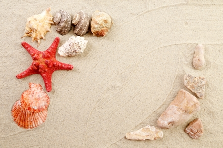 Sea star and shells on the sand. Whole background. photo