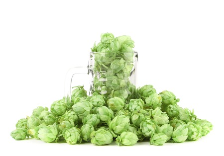 Close up of green hop in mug. Isolated on a white backgropund. photo