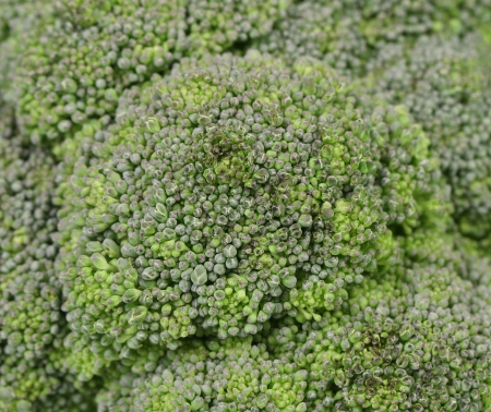 Close up of fresh broccoli. Whole background. photo