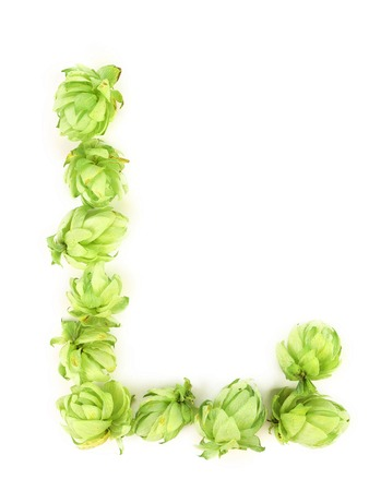 Hop flowers laid in form of letter L. Isolated on a white background. photo