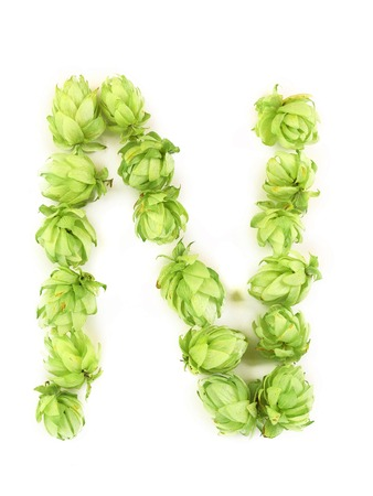 Hop flowers laid in form of letter N. Isolated on a white background. photo