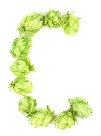 Hop flowers laid in form of letter C. Isolated on a white background. photo