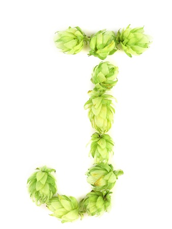 Hop flowers laid in form of letter J. Isolated on a white background. photo