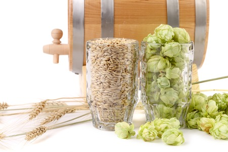 Composition of hop and barley. Isolated on a white background. photo