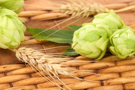 Closeup of hop and wheat. On a wooden background photo