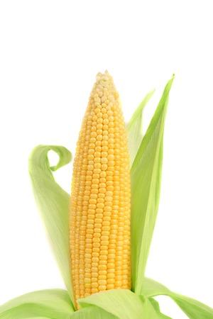 corn ear: Mazorca de ma�z fresco. Aislado en un fondo blanco. Foto de archivo