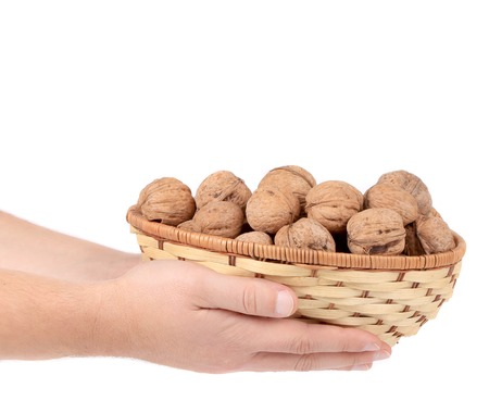 Basket of walnuts in hands. Isolated on a white background. photo