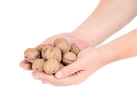 Bunch of walnuts in hands. Isolated on a white background. photo