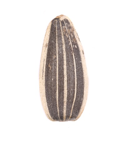 sunflowerseed: Close up of sunflower seed. Isolated on a white background. Stock Photo