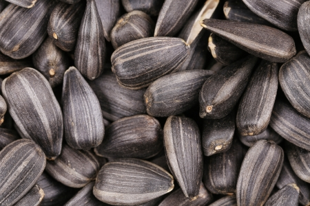 black seeds: Background of sunflower seeds. Whole background. Black seeds.