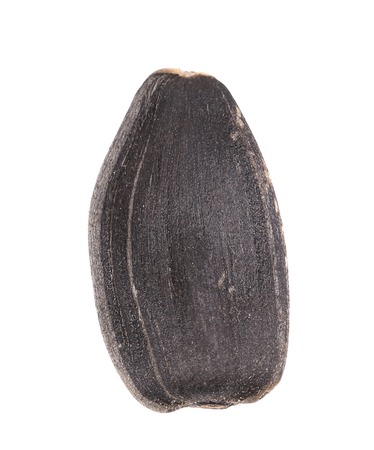 Black sonflower seed. Isolated on white background. photo