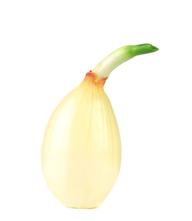 Golden sprouting ripe onion. Isolated on a white background. photo