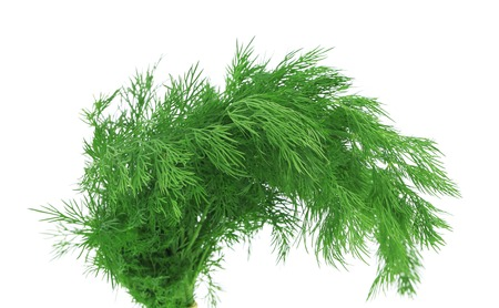 Bunch fresh dill herb. Isolated on a white background. photo