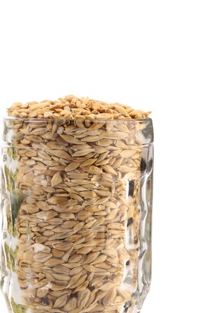 lupulus: Close up of glass with barley. Whole background. Stock Photo