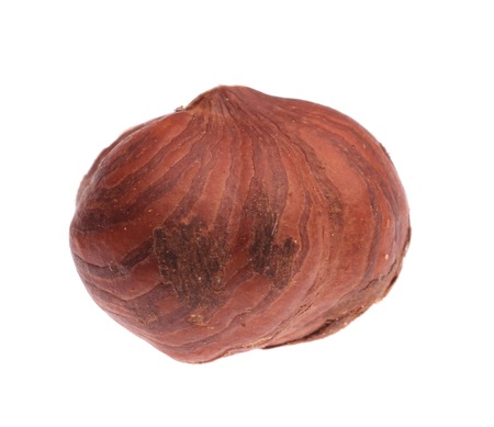 Close up of whole filbert nut. Isolated on a white background. photo
