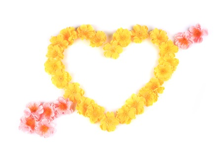 Yellow flowers in form of heart. Isolated on a white background. photo