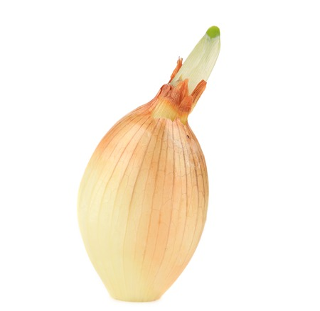 Sprouting onion. Isolated on a white background. photo