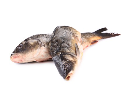 Crude carp. Isolated on a white background. photo