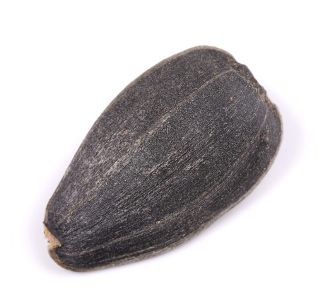 one sunflower seed on a white background photo