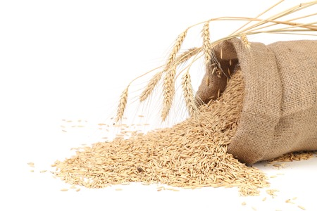Sack with grains and ear of wheat. Isolated on a white background. photo