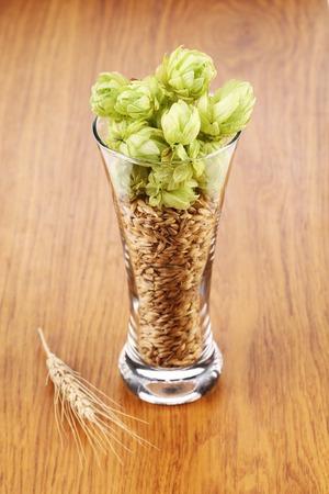 beer tap: Glass with hop and wheat. Isolated on a white background.