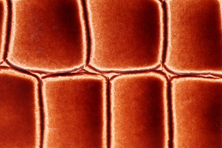 Close up of red-brown leather texture. Whole background photo