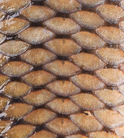Carp fish scales. Background. photo