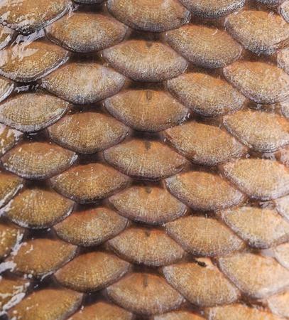 Carp fish scales. Background. photo