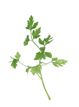Branch of parsley. Isolated on a white background. photo