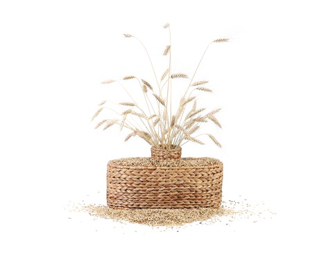 Wheat ears in basket. Isolated on a white background. photo