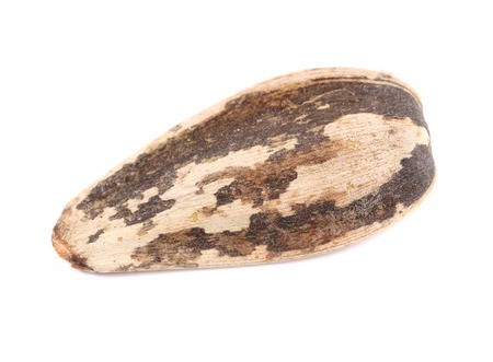 derive: Close up of sunflower seed. Isolated on a white background. Stock Photo