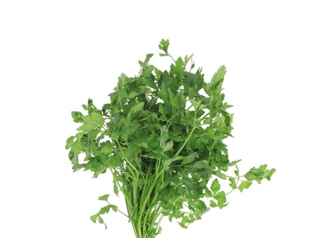 Bunch of parsley on a white. photo